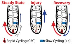 Intestine Injury